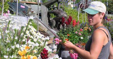 A gardener watering flowers